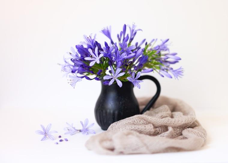 06-13-17 Purple Flowers_11_Blog