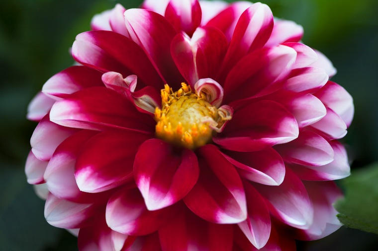 07-19-2017 Dahlia-52_Stacked_blog