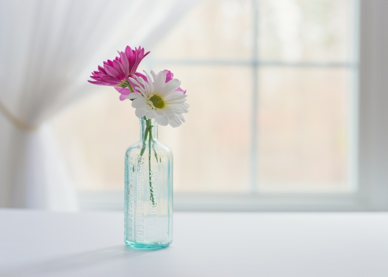 02-04-18 Pink Daisies-179_LR