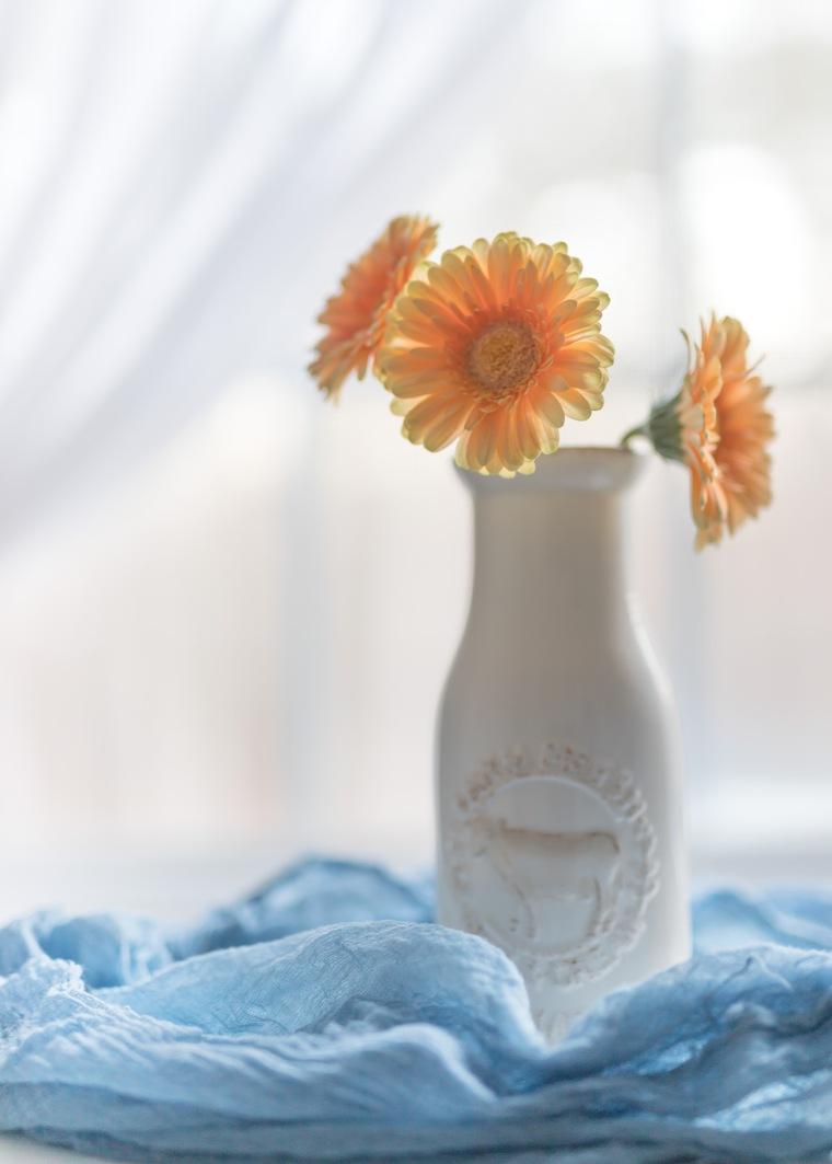 03-26-18 Gerber Daisies-10_LR